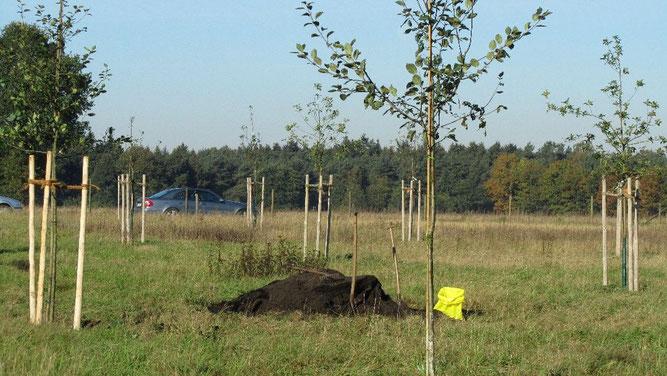 Die ersten Obstbäume auf der Streuobstwiese