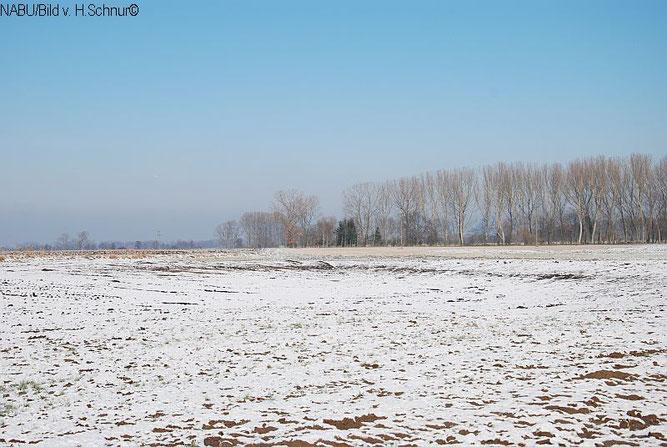 Winterlandschaft im Ried
