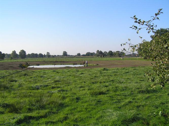 Neu angelegte Teiche bieten Lebensräume für Amphibien - Foto: NABU Sulingen