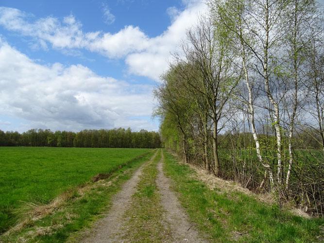 Typischer Erdweg im Sulinger Moor - Foto: NABU Sulingen/Udo Sakuth