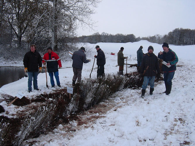 Pflanzaktion im Winter - Foto: NABU Sulingen/Udo Sakuth