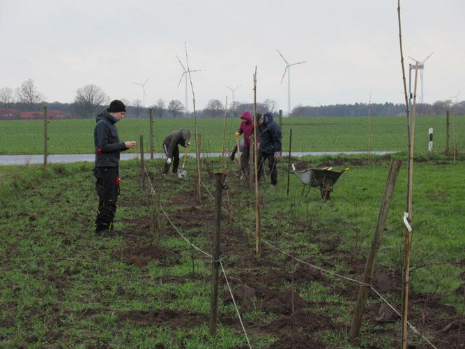 Pflanzen im Winter 2019/20 - Foto: NABU Sulingen/Udo Sakuth
