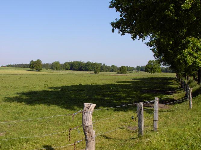 Zusammenhängende Wiesenbereiche kennzeichnen das Nördliche Suletal -  Foto: NABU Sulingen