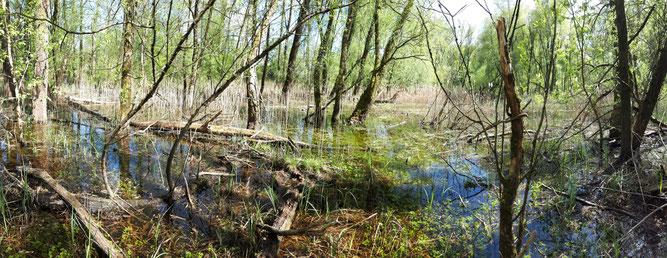 Weiherwald nach Hochwasser 2020, C. Buchta