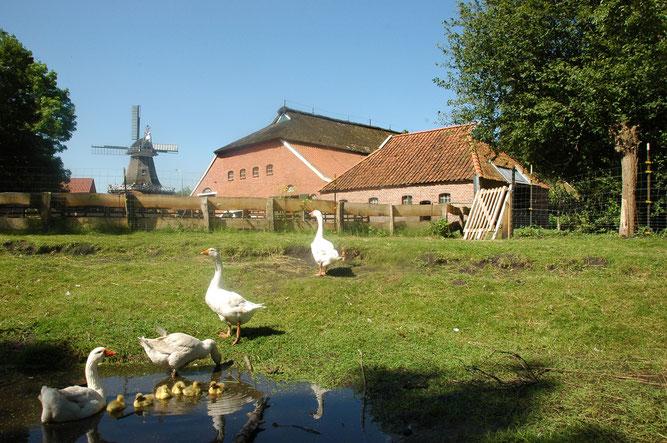 Der NABU Woldenhof und die Wiegboldsburer Mühle
