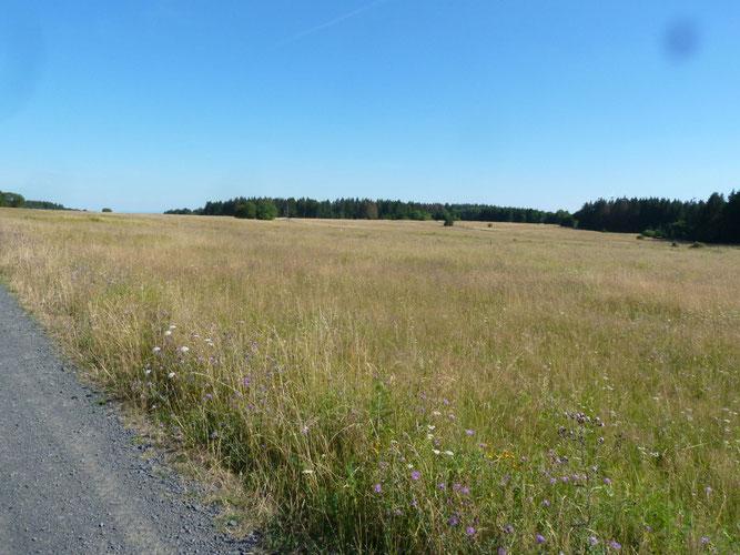 Blick über den ehemaligen Standortübungsplatz Richtung Osten