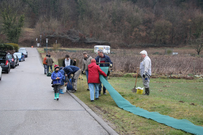 Alle helfen zusammen den Krötenzaun in der Erlenstraße in Mauer aufzubauen/März 2018 (Foto: B. Budig)