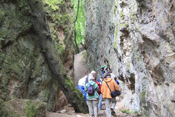 Exkursion in die Spatschlucht (Foto: B. Budig)