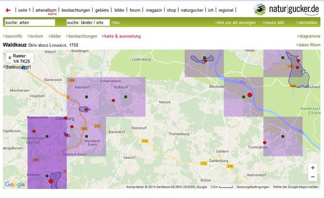 Waldkauz in und um Lüneburg (Quelle: naturgucker.de - verlinkt mit Klick auf das Bild)