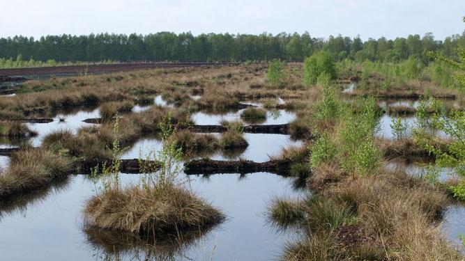 Renaturierungsflächen Großes Moor. Foto: NABU/M.Gräwe
