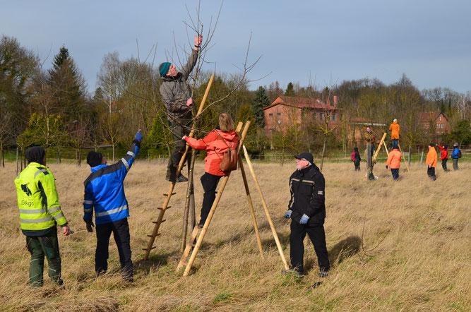 Zur Absicherung der zahlreichen Projekte für die Natur führt der NABU Wolfenbüttel derzeit eine Mitgliederwerbeaktion durch. Foto: Cornelia Schilling
