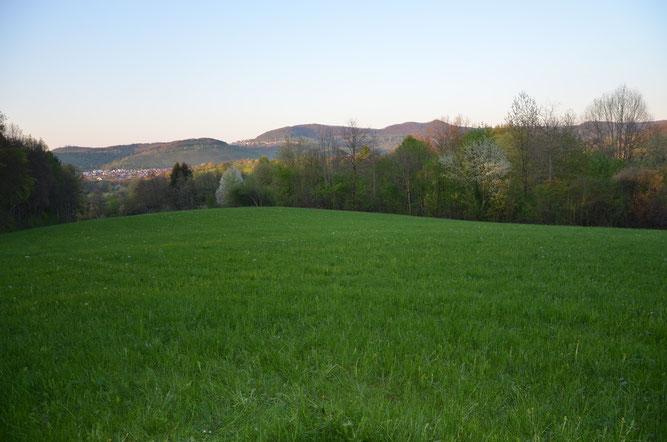 Schutzgebiet Steuchenteich - Foto: NABU Metzingen/Horst Lang