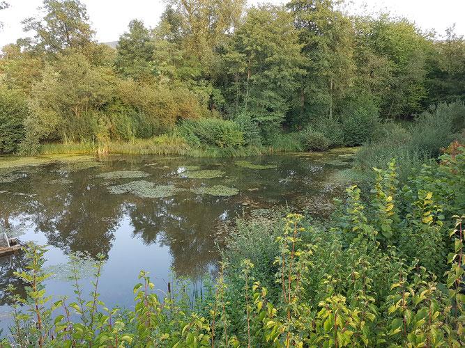 Schutzgebiet Schmiedstobelsee - Foto: NABU Metzingen/Horst Lang
