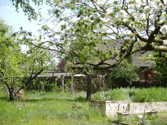 Foto: (K. Geilen) Obstbaumbeschnitt im NABU-Garten