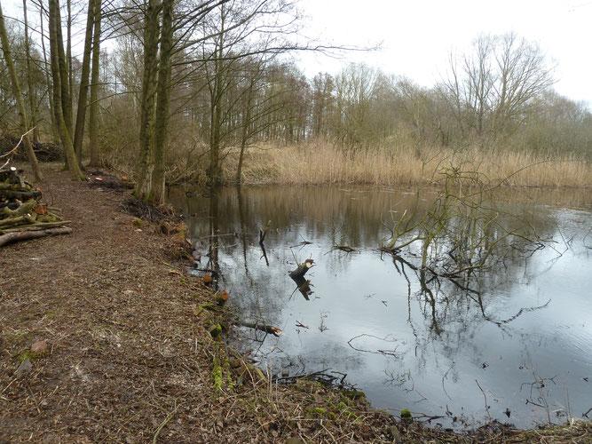 März 2017 - Durch Freischneiden der Ufer wurde viel Wasserfläche zurückerobert (c) Ingo Ahrens
