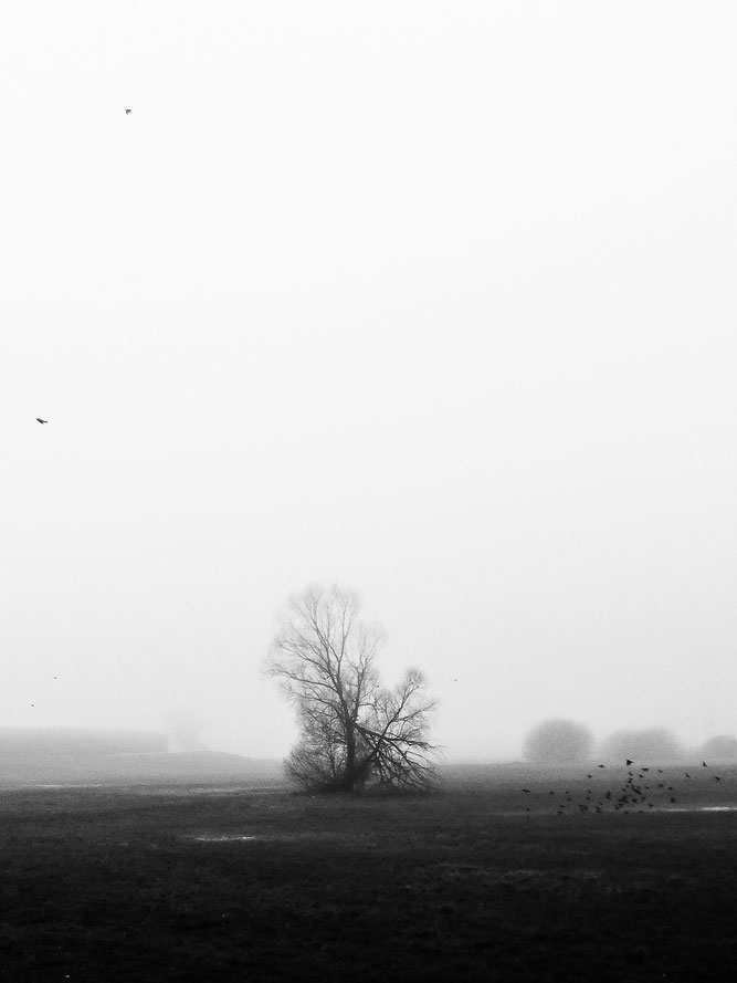 Die Vögel, Nebel, Nebelstimmung, foggy day, foggy mood, the birds, tree, alone, fog, mystic, magic, Schwarzweissfotografie, kreative Fotografie, Fototipps