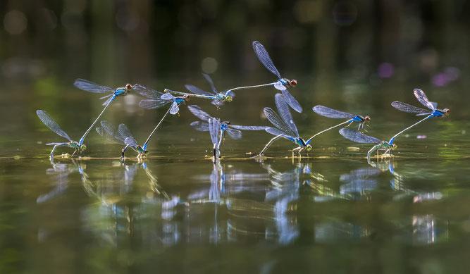 Libellen sollen hier wieder heimisch werden. Foto: NABU / Steffen Jung