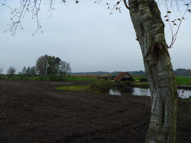 Artenreiche Feuchtwiesen, wie sie hier entsteht, gehören zum Landschaftsbild im Kollbecksmoor. Foto: Bettina Schroeder