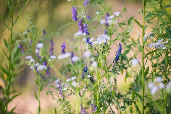 Blütenvielfalt mitten im Ort soll zur Nachahmung anregen. Foto: NABU / Sebastian Hennigs
