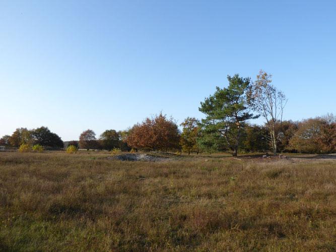 Blick auf das Dünengebiet bei Unterstedt. Foto: S. Pils