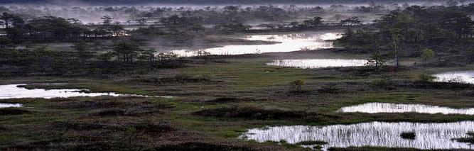Eine intakte Regenmoorlandschaft in Estland. Foto: Dr. Hans-Bert Schikora
