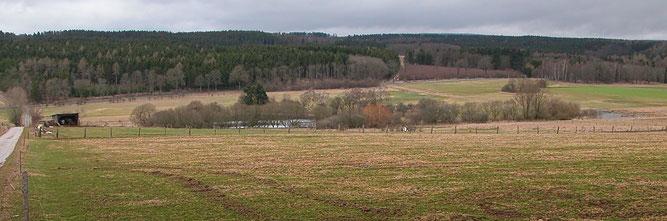 Goldhäuser Teich von Goldhausen aus gesehen. Rechts davon befindet sich der vernässte Bereich für Amphibien.