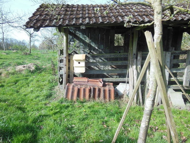 Nistkasten an einem alten Viehunterstand neben einer Streuobstwiese in Wiesens