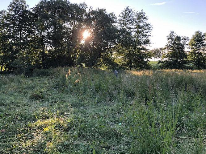Schafweide ohne Tiere, hochstehendes Kraut und tief stehende Sonne