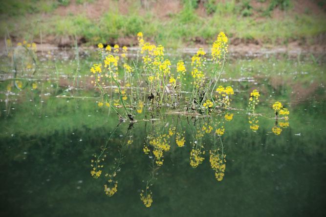 Naturnahes Kleingewässer - Foto: Rainer Ebling