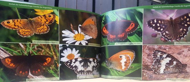 Blick in das Buch mit den Fotos von Wolfgang Düring