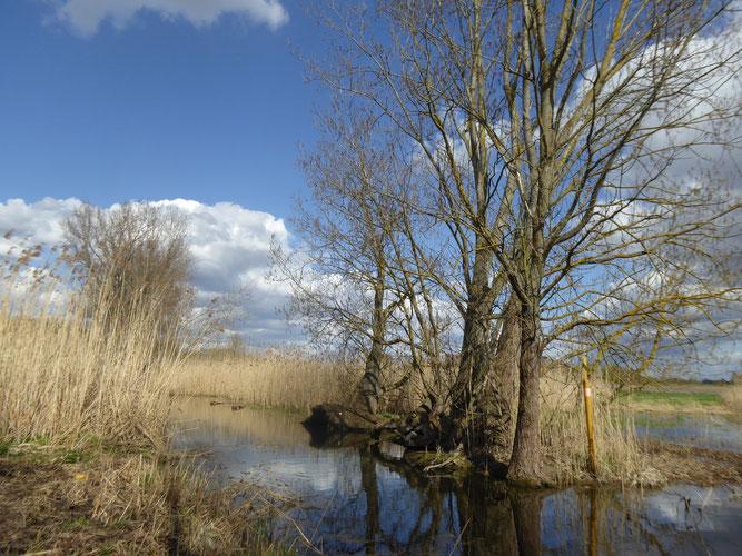 Naturschutzgebiet Datterbruch bei Dornheim