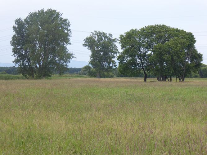 Naturschutzgebiet Erlenwiese und Kratzenau
