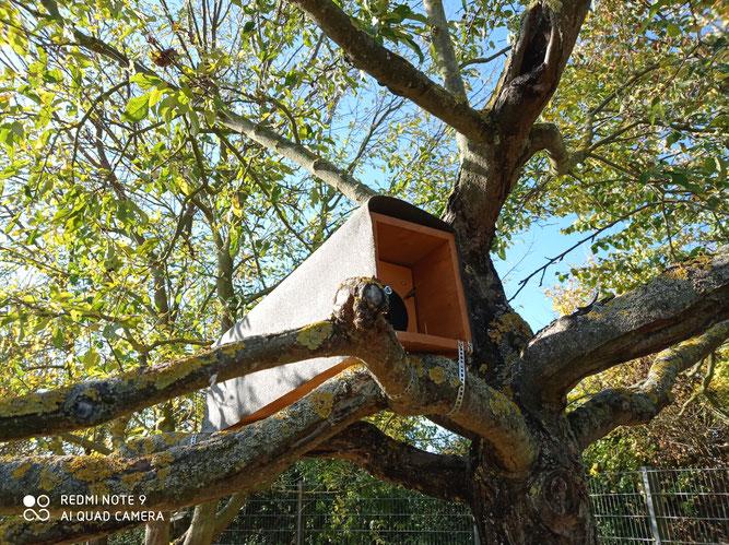 Steinkauzröhre im Obstbaum. Über den Ast vor dem Ausgang können die Jungvögel aus dem Nest krabbeln und das fliegen üben (Foto: Charline Shimmura)