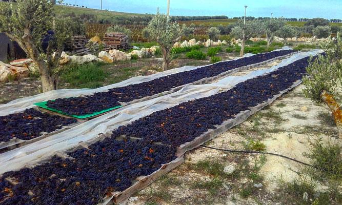 Sicilia, Italia. Itinerari di vino. Blog Etesiaca
