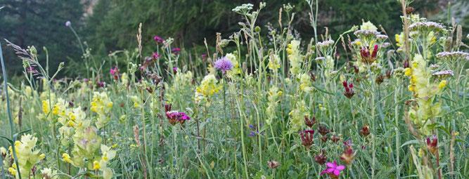 Artenreiche Blumenwiese, Foto: A. Treffer
