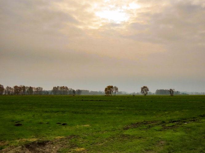 Sonnenschein im Thurbruch / Foto: NABU Insel Usedom, Bernd Schirmeister