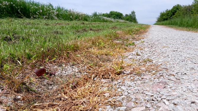 Das Spritzen von Herbiziden auf befestigten Flächen ist verboten | Bild: E. Schröder