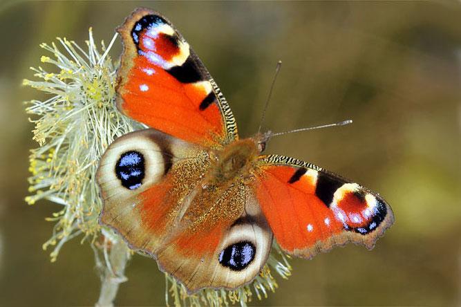 Mit ihrer Spende helfen sie uns die Artevielfalt in Hessen zu erhalten