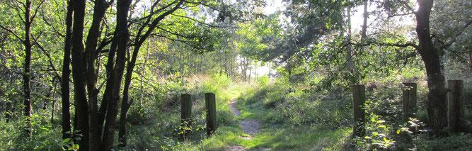 Pipinsburg und Dorumer Moor (Foto: Kenneth Witt)