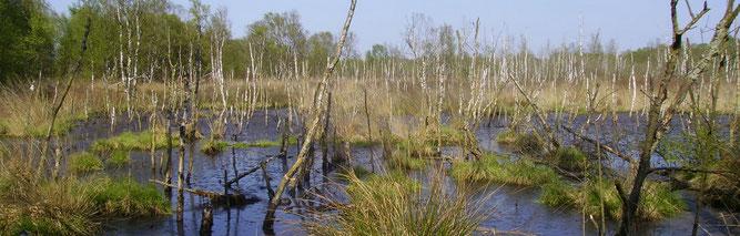 Dorumer Moor (Foto: Kenneth Witt)