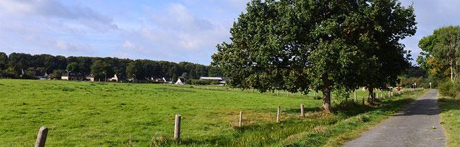 Alte Eiche am Wegesrand (Foto: Kenneth Witt)