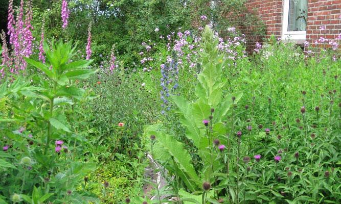 Ein Naturgarten zieht viele Insekten an - und ernährt die Fledermäuse! Foto: Sabine Fuchs
