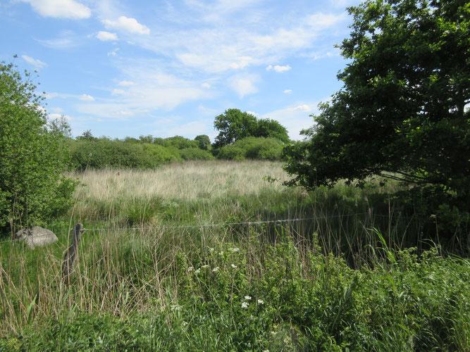Blick ins Grundstück - Foto: W.G.