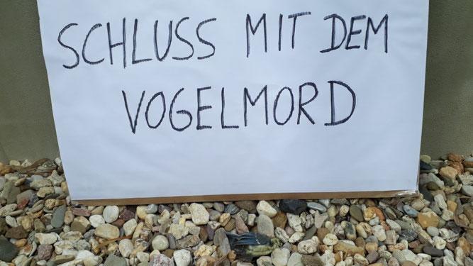 Auch am Tag der Mahnwache fand der NABU eine tote Kohlmeise vor der Glasfront. Foto: NABU Leipzig