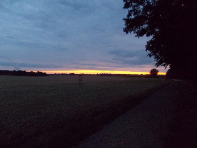 Die Exkursion endete stimmungsvoll am Waldrand bei Sonnenuntergang. Foto: NABU Leipzig