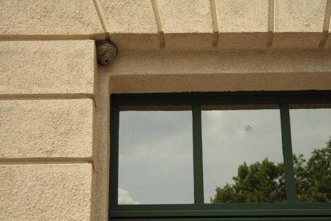 Alter Neststandort an der Nikolaischule.