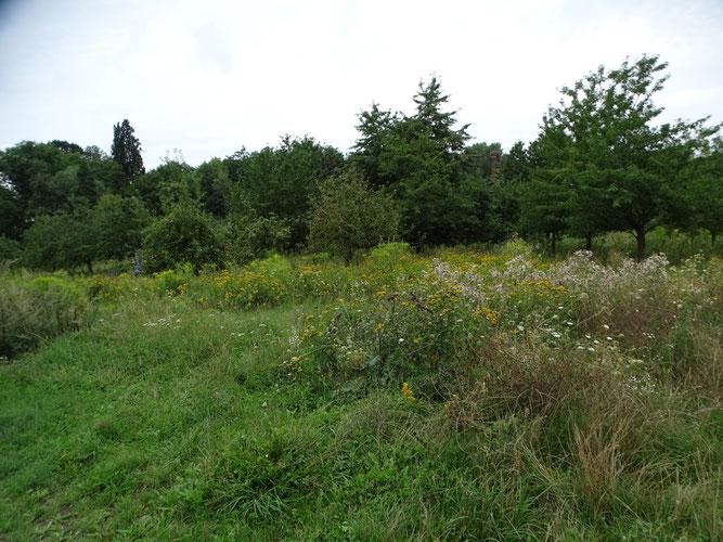 Wertvoller Insektenlebensraum: die NABU-Streuobstwiese Knauthain. Foto: Beatrice Jeschke