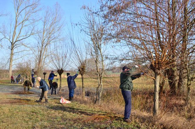 NABU-Arbeitseinsatz zum Erhalt der ökologisch wertvollen Kopfweiden auf den Parthewiesen. Foto: Reinhard Rädler