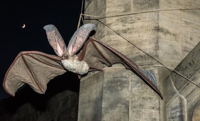 Abendstimmung auf dem Südfriedhof: Mond und riesige Fledermaus. Foto: Ludo Van den Bogaert