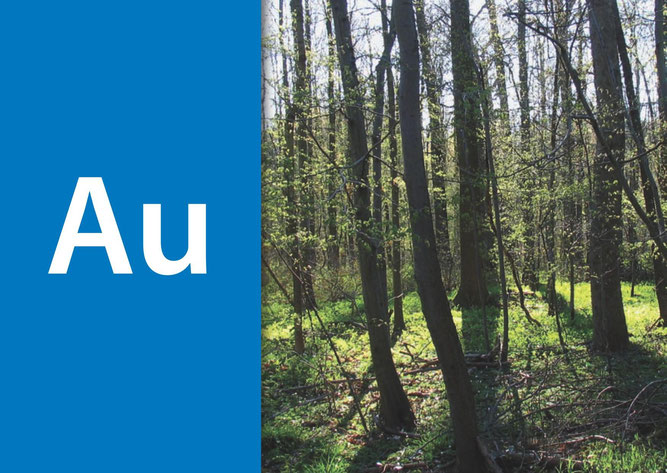 Au-Wald